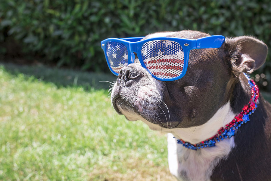 july-4th-dog