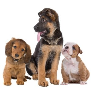 adorable puppies sitting