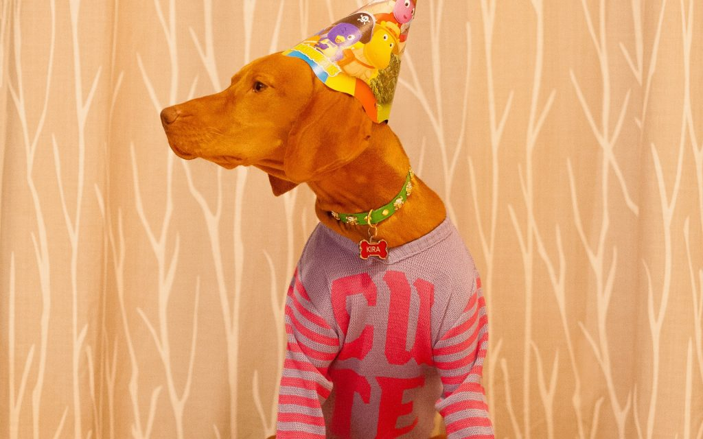 red dog wearing birthday hat and shirt that says cute