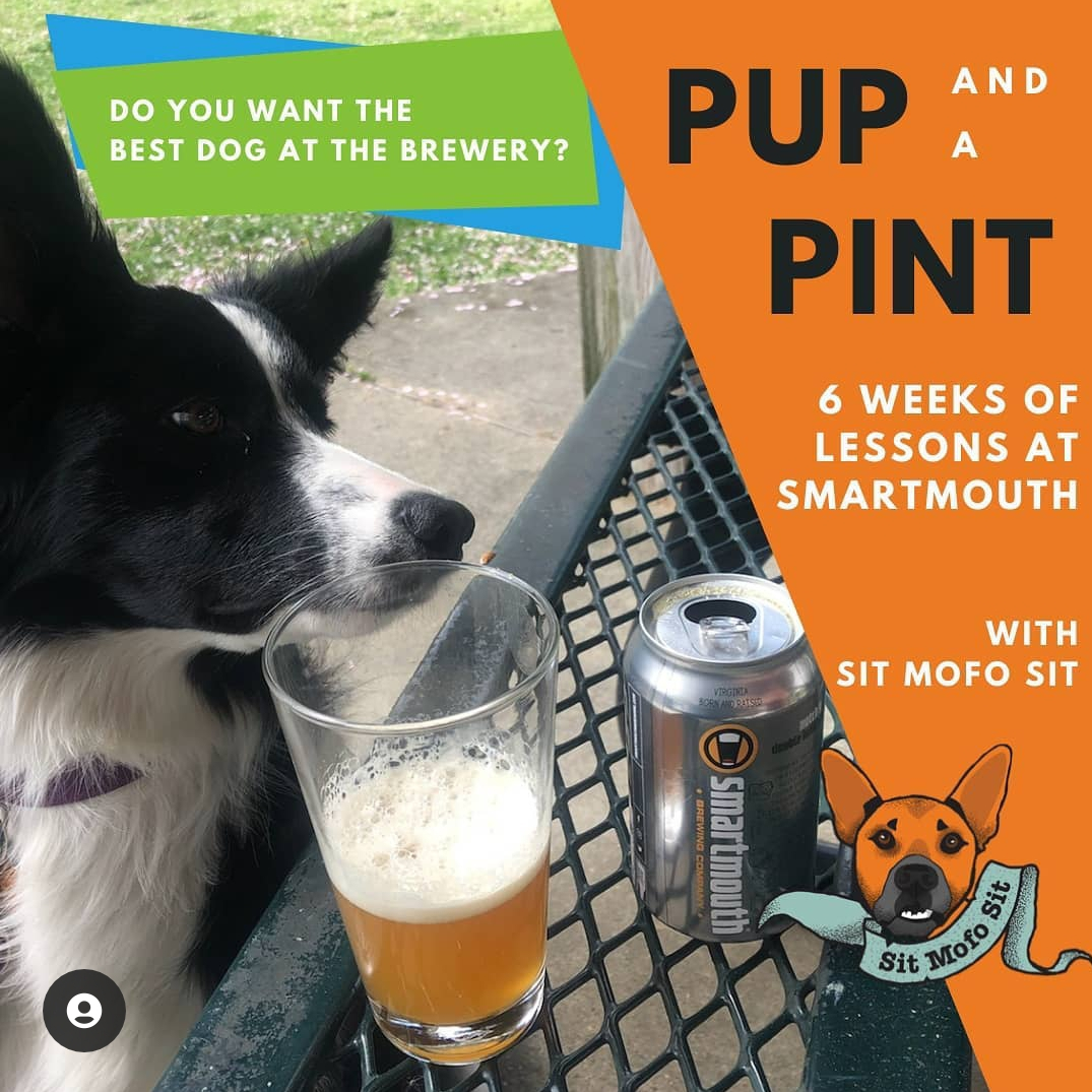 dog with smartmouth beer