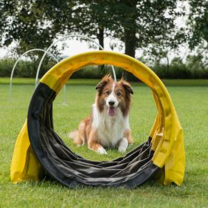 dog in a tube